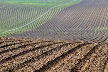 Tres cuartas partes del suelo están en peligro por erosión