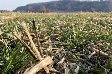 Encuesta sobre el uso del glifosato por parte de los agricultores europeos